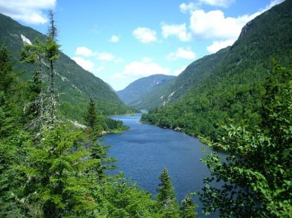 agua--cielo--arboles--rio--bosque--verano--naturaleza_121-69322