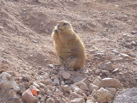 List Of Desert Animals