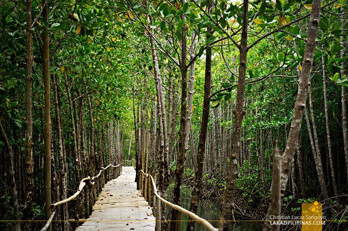 Lush Mangroves at Kalibo's Bakhawan Eco Park