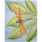 Betsy Drake Dick's Dragonfly Place Mat Set of 4, Multicolored, Tableware