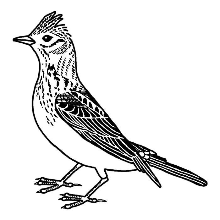 ヒバリ雲雀白黒茨城県の鳥都道府県の木花鳥イラスト素材