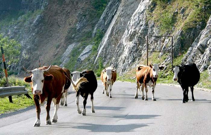 Άρτα: Ενημέρωση κτηνοτρόφων για απαγόρευση κυκλοφορίας ανεπιτήρητων ζώων