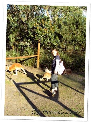 Caversham Wildpark. WA