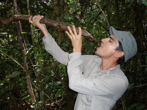 Trouver de l'eau dans la jungle