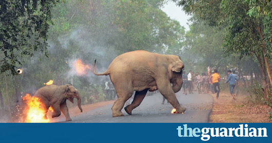 Photo of elephant and calf fleeing fire-throwing mob wins top prize | World news | The Guardian