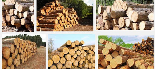 Types Of Timber & Woods Used For Making Wooden Furniture — Glehand