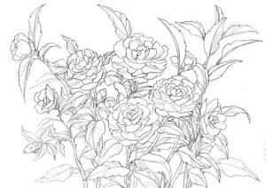 花のスケッチ 山茶花 大人の塗絵 塗り絵で癒し 風景画 花の絵