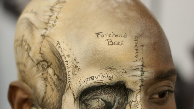 Click here to read Lovely medical illustration of the human skull painted directly on a human head