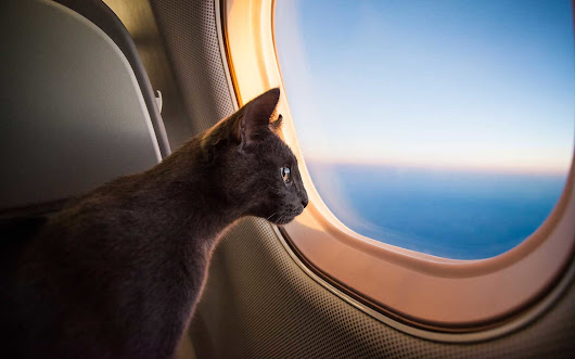 Best Practices for Traveling with Your Pet
