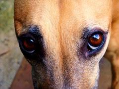 Daisy's Eyes by Nancy Dunne