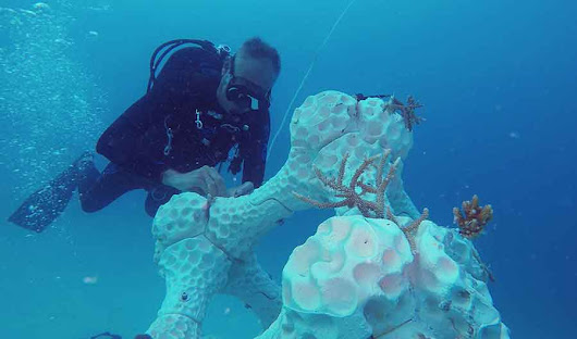 Maldives: The coral reef from the 3D printer - Peter von Stamm