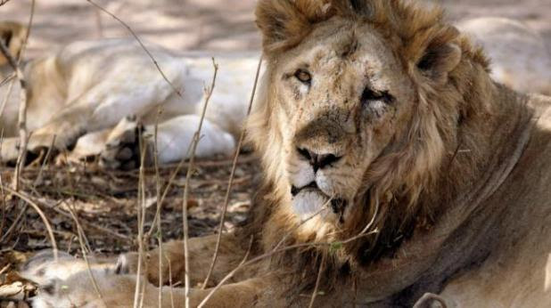Image result for lions found dead