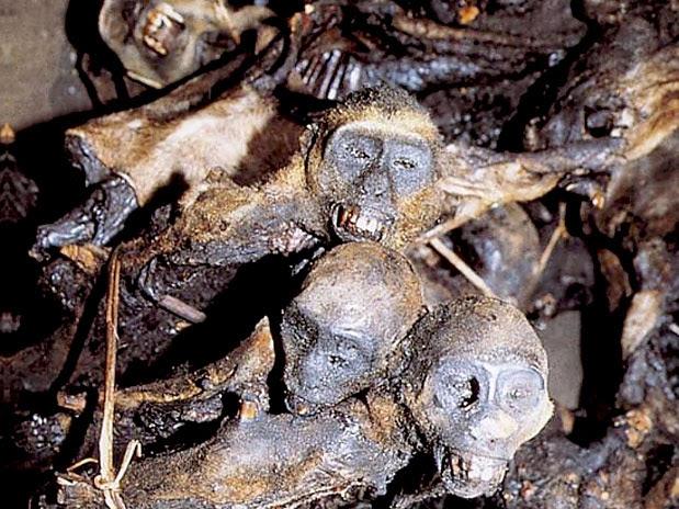 Comidas Estranhas - Macaco Defumado