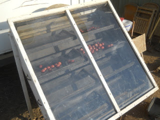 Plums on Solar Food Dehydrator