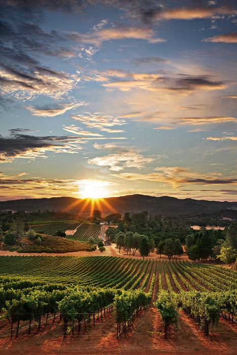Sunset Vineyard, Santa Maria, California