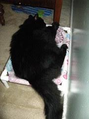 Huggy Bear in his cat hammock