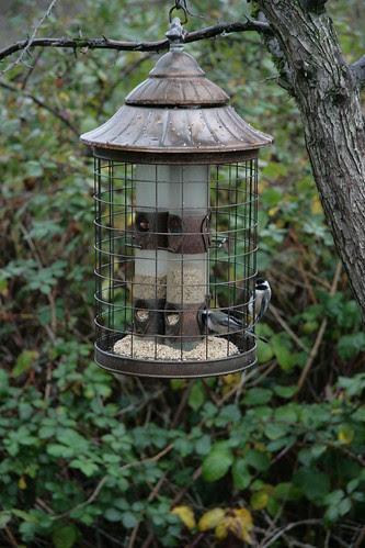 Chickadees, Reifel Bird Sanctuary