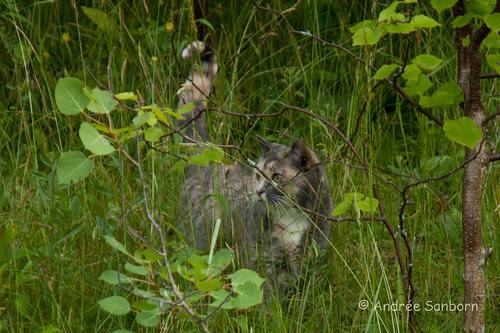 Possum Takes a Hike-2.jpg