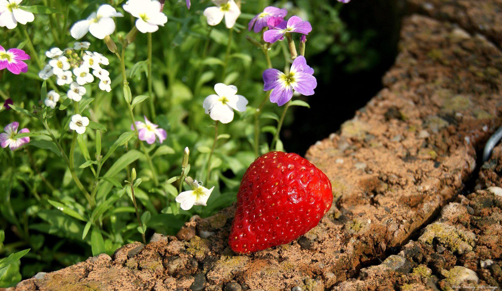 Mon June 2, 2014 photo berryharvest1_zps5b2ac9e7.jpg