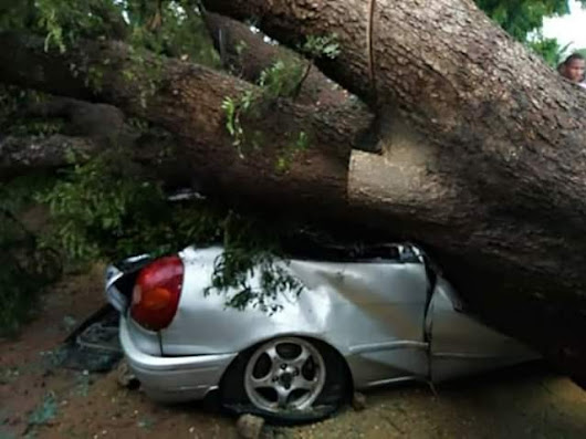Photos: Huge tree falls on car in Adamawa, killing a popular Igbo Mechanic during heavy windstorm