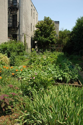 Clifton Place Block Association Garden