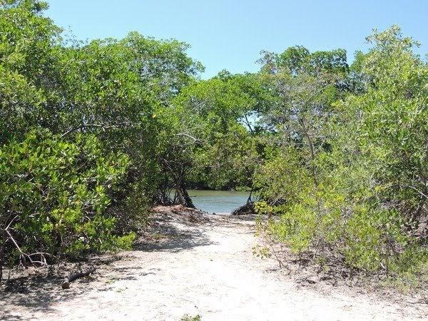 Ceará lidera ranking de desmatamento de áreas de restinga