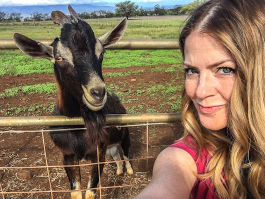 I Found Goats in Maui and You Can Too! - CleverDever Wherever