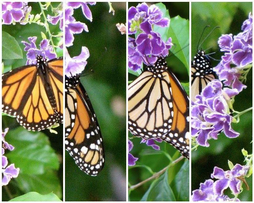 Mosaic Monarch Butterfly