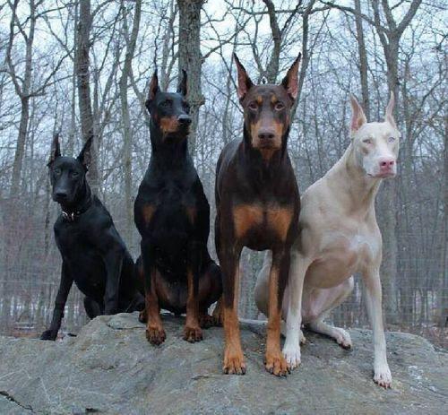 ►10 Razas de perros que pueden  ser peligrosas sin ser Educadas