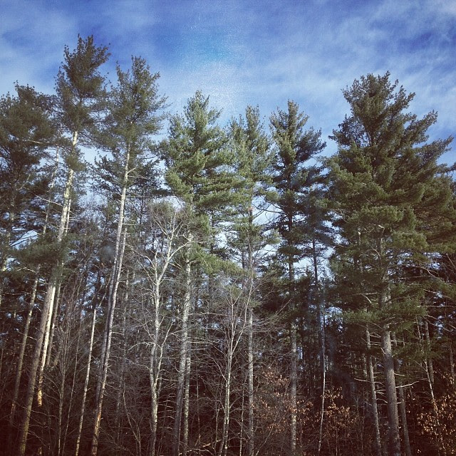Timbah! #newengland #trees