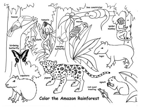 coloring pages  animal habitats coloring pages