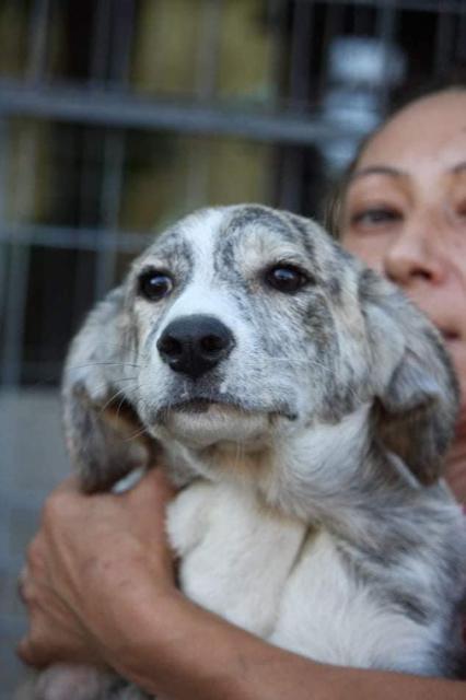 Masha – 5 month old female Cross-Breed