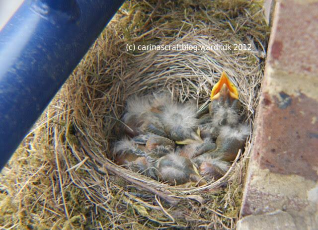 Birdlings