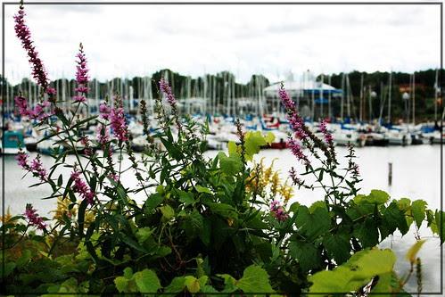 dick bell park (& sailing club)