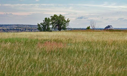 odyssey-in-grass