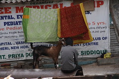 The Goat and the Butcher Sharing a Private Moment by firoze shakir photographerno1