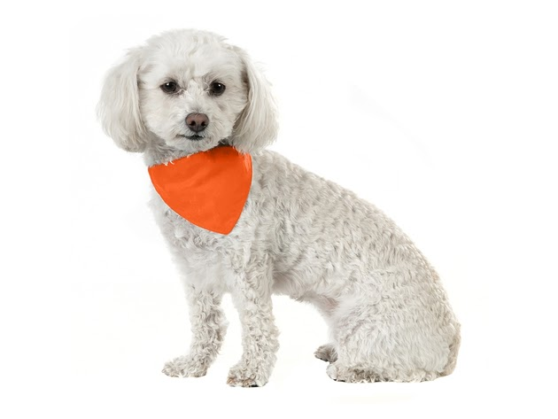 Balec 10 Pack Solid Cotton Dog Bandana Triangle Bibs - Small & Medium Pets - Orange for $19