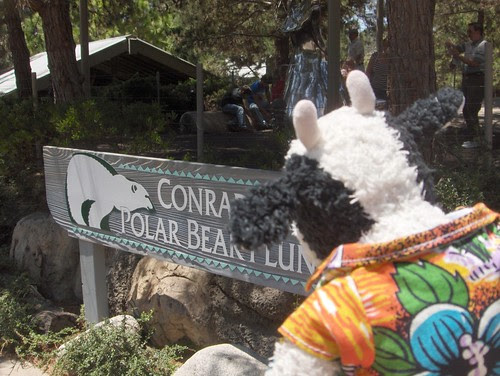 Conrad Poos and his Dancing Polar Bears