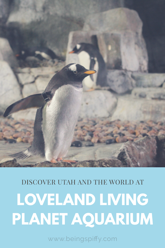 Discover Utah and the World at Loveland Living Planet Aquarium
