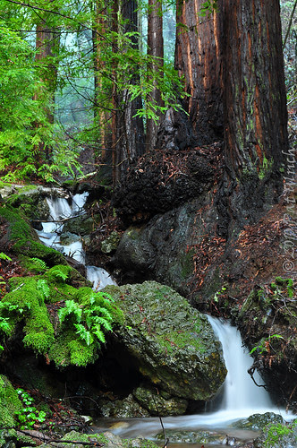 Redwoods and Waterfalls