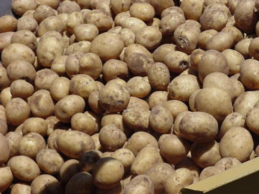Earn  Ksh118,000 in 3 months from potatoes