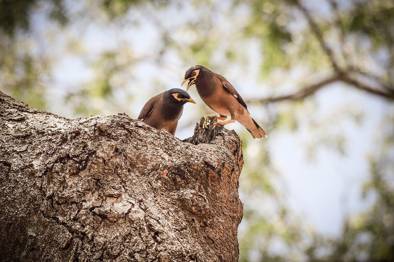 Unduh 99  Gambar Burung Pipit Yg Kakinya Patah  Paling Keren
