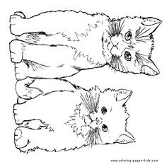 clever domestic animal cat 20 cat coloring pages  free
