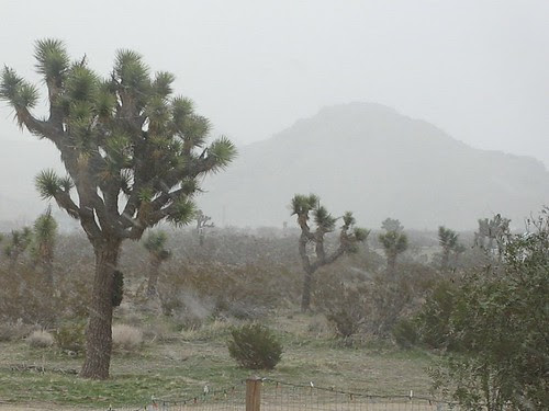 Mojave Starting to Snow