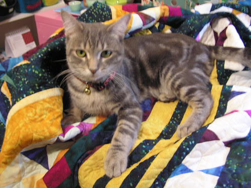 spock on quilt