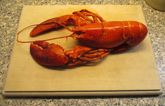 Wonderful Lobster – perfectly cooked ready for preparation by Anthony J Sargeant for Christmas Eve Dinner