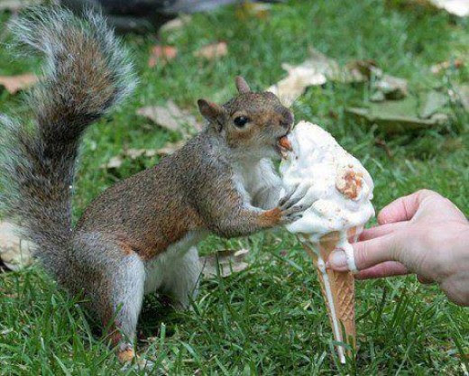 Feeding Wild Squirrels:Tips to Save You money