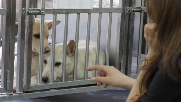 Cães no Taiwan