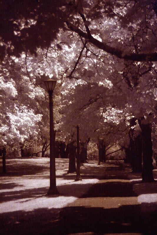 infrared, irving park