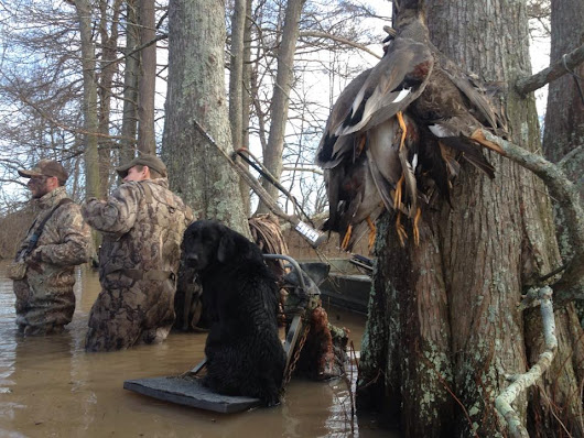 Duck & Goose Hunt Photo Gallery | Waterfowl Hunting Image Gallery